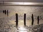 West Wittering West Sussex England UK. Backlit  wooden groins in silhouette on empty wet sandy  beach at low tide in winter  Keywords: Britain coast scene landscape tide tidal pool  nobody
