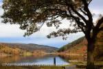 Llyn Geirionydd lake framed by Oak tree in Gwydyr  Forest Park in autumn in Snowdonia National Park.  Trefriw, Conwy, North Wales, UK, Britain, Europe