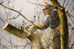 Tree surgeon wearing helmet, visor, protective gloves 